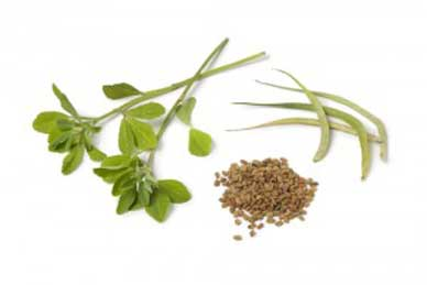 Ingredient Spotlight, Fenugreek