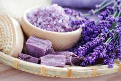 Ingredient Spotlight, Lavender