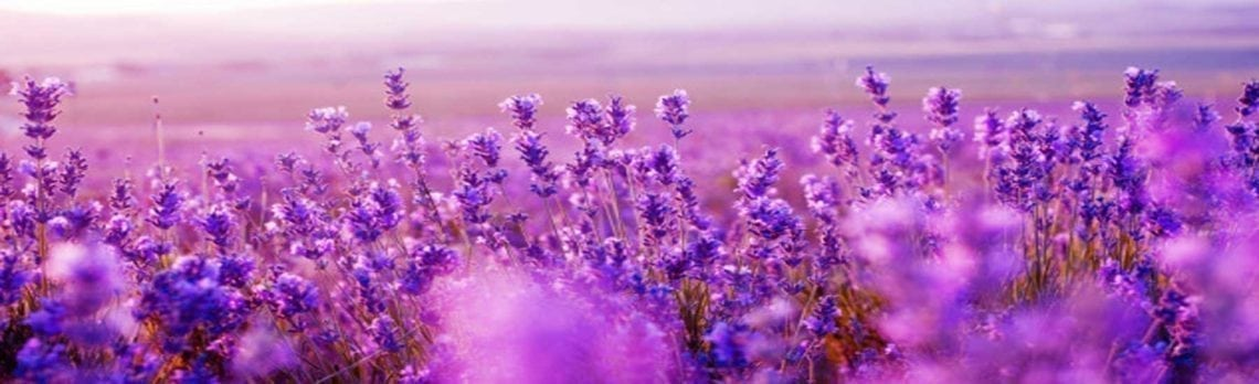 Ingredient Spotlight: Lavender, the Natural Stress Reliever