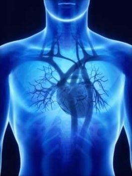 Royal Jelly, cardiovascular health