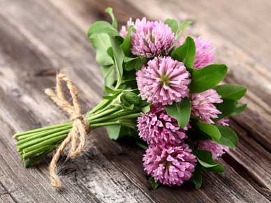 Naturally Soothe Menopause, red clover