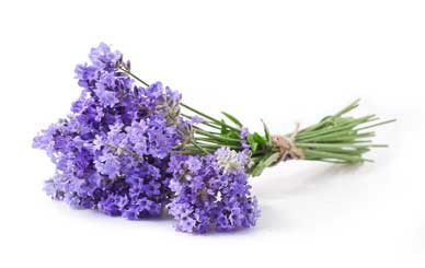 Naturally Soothe Menopause, lavender