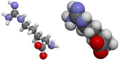 L-arginine, Female Libido