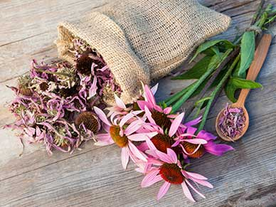 The Top 6 Immune Boosting Herbs for Cold and Flu Season 2