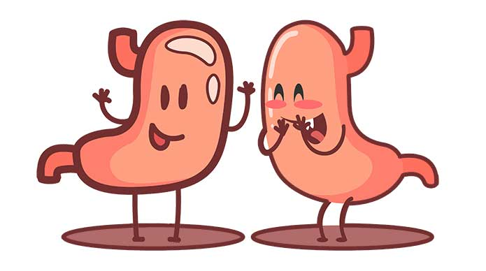 The Astonishing Connection Between Gut Health and Libido