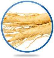 White Panax Ginseng Root Extract