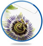 Passion Flower Herb Extract